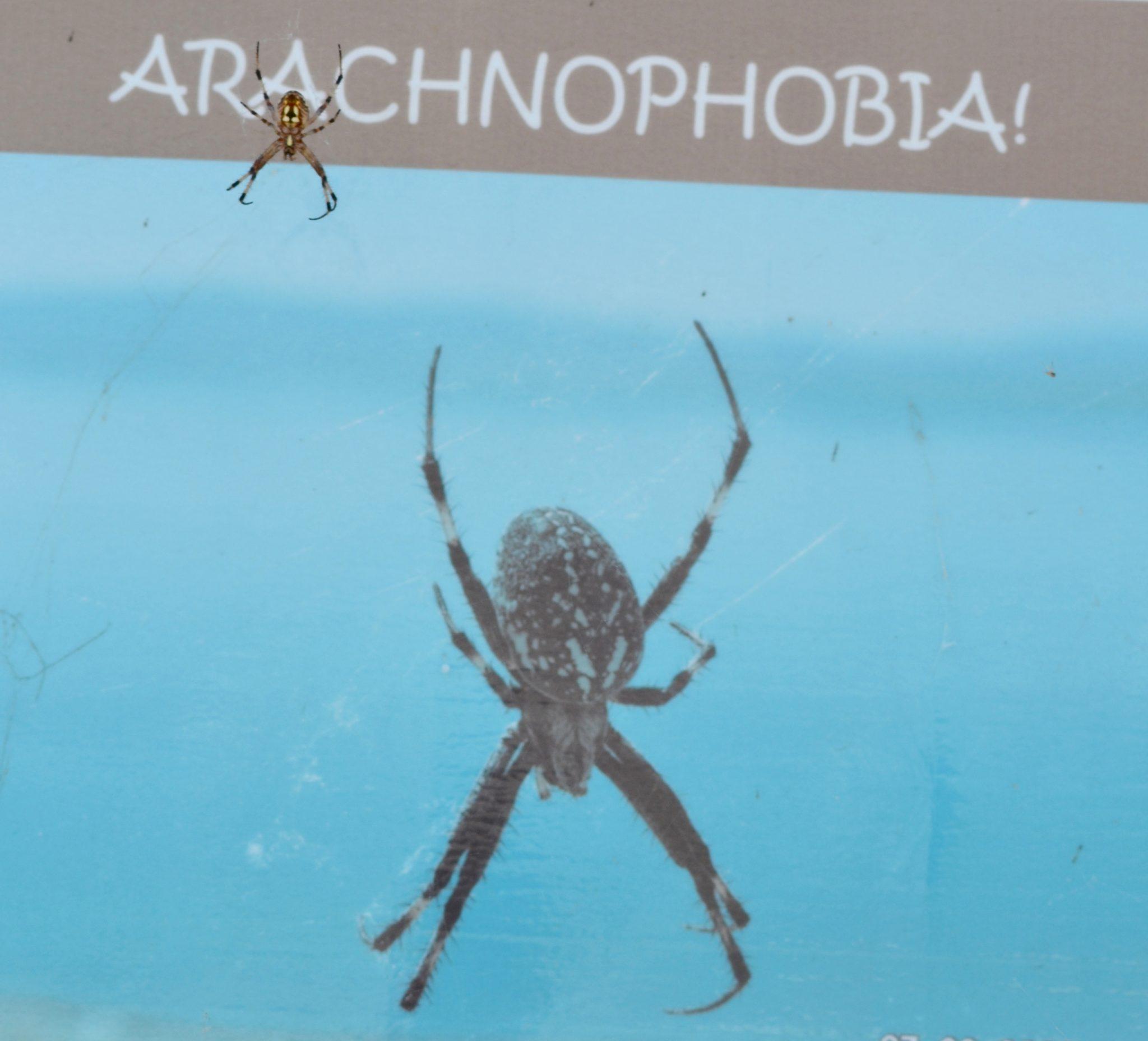 Orb weaver spiders infest west bank of Walker Lake