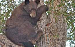 Information Sought on Shot Bear Near River