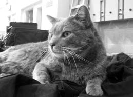 One cool cat: Smokey Joe calls JPO building home
