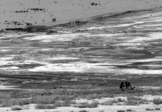 Wild horse fence line affected by drought at Walker Lake