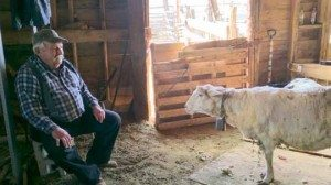 Heidi Bunch photos Willy Buffington and his sheep Wyoming share a moment after she is shorn in his Luning shed.