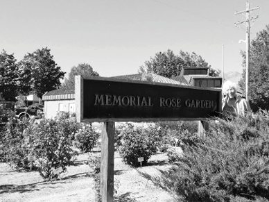Rose Garden Improving with Help of Volunteers