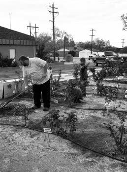 Memorial Rose Garden taking shape