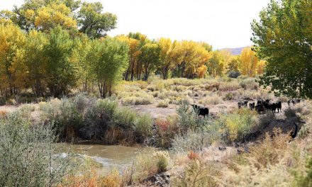 Walker River Recreation Area to Open Next Month