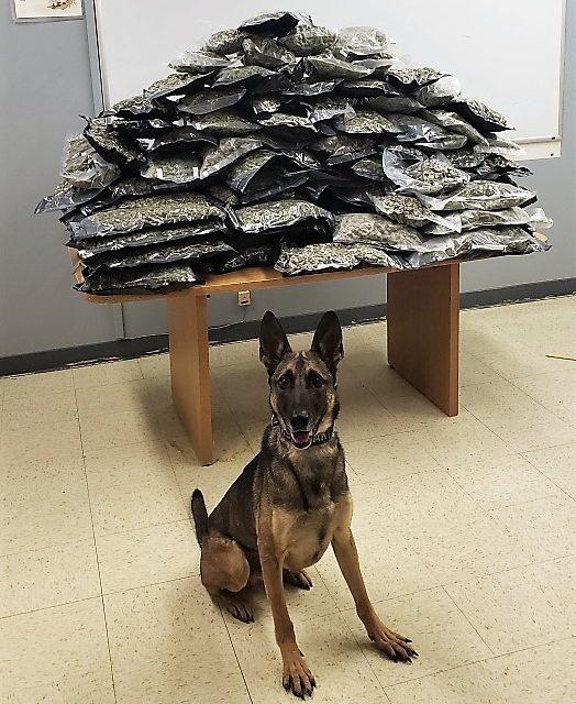 Man Jailed After 100 Pounds of Marijuana Found During Stop